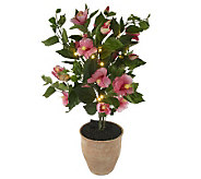 Bethlehem Lights Battery Op. 32 Potted Hibiscus - H191122