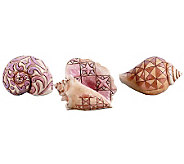 Jim Shore Heartwood Creek 3-Piece Set Mini Seashells - H361726
