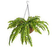 Bethlehem Lights Battery Op. Hanging Fern Basket w/ Timer - H15533