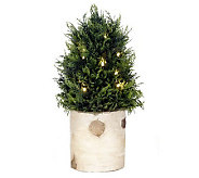 Bethlehem Lights 15 Battery Op. Cedar Tree in Birch Planter - H193151