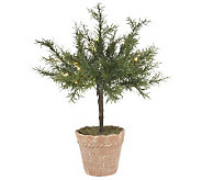 Bethlehem Lights Battery Op. 18 Potted Rosemary Plant - H191062