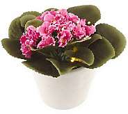 Bethlehem Lights 7 Battery Op. Potted African Violet w/ Timer - H166494