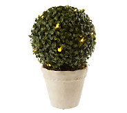 Bethlehem Lights Battery Op. 10 Boxwood Topiary w/Timer - H191095