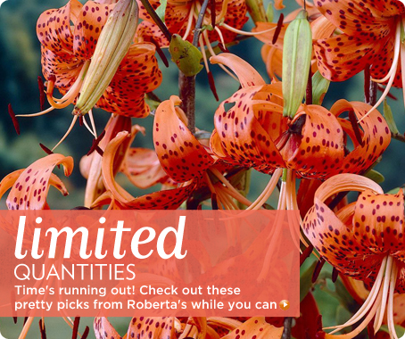 Roberta's Unique Gardens Limited Quantities